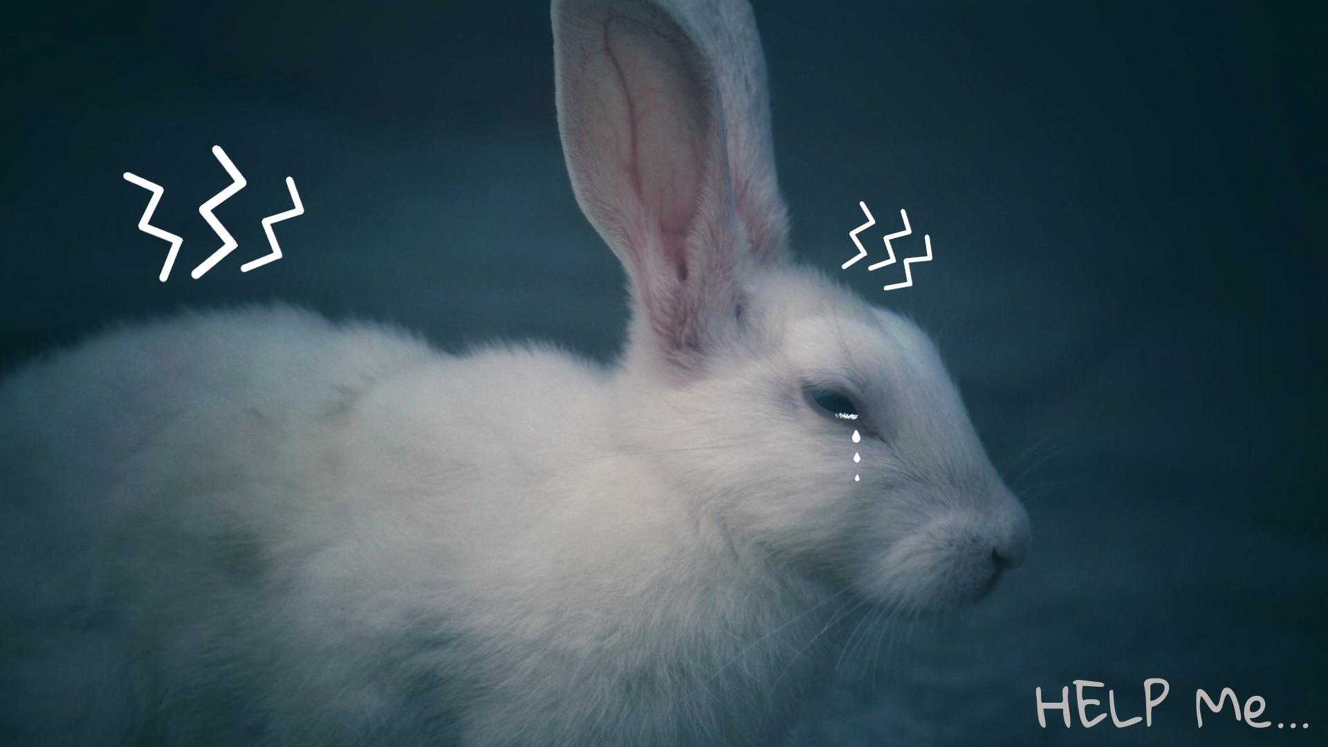 objawy bólu u królika