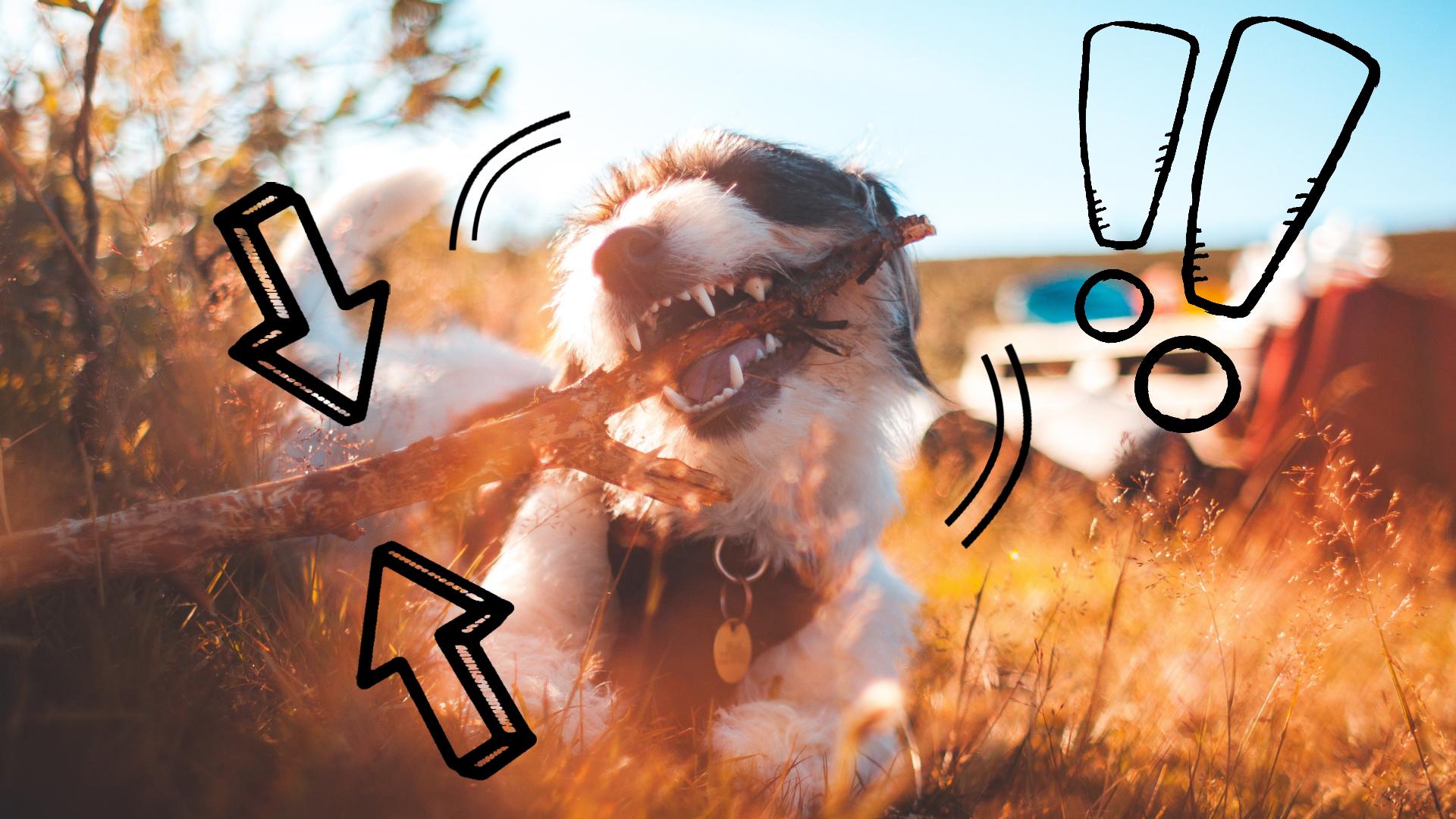 najlepsze naturalne przysmaki dla psa