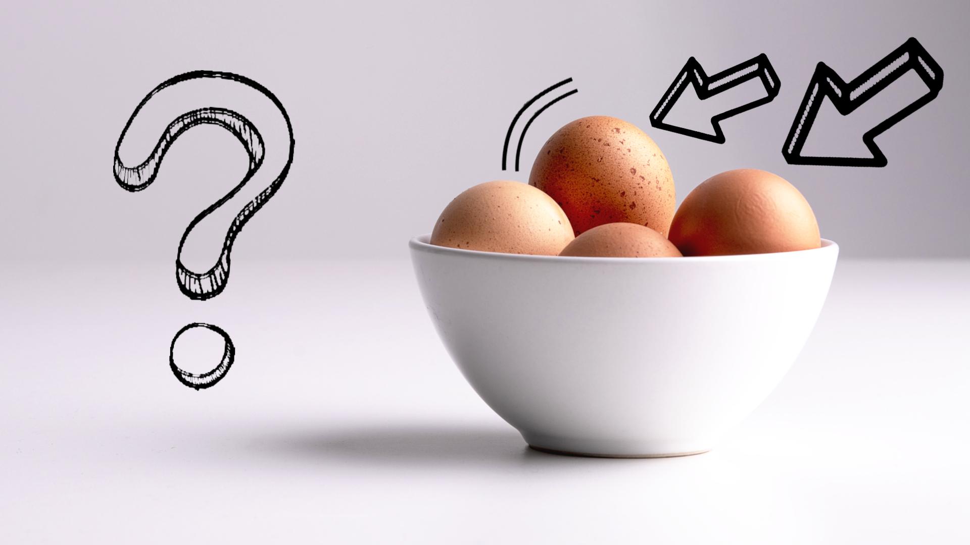 jajko dla psa czy pies może jeść jajko
