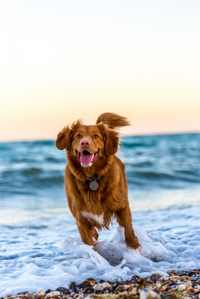 dlaczego warto mieć psa czyli czego może Cię nauczyć pies