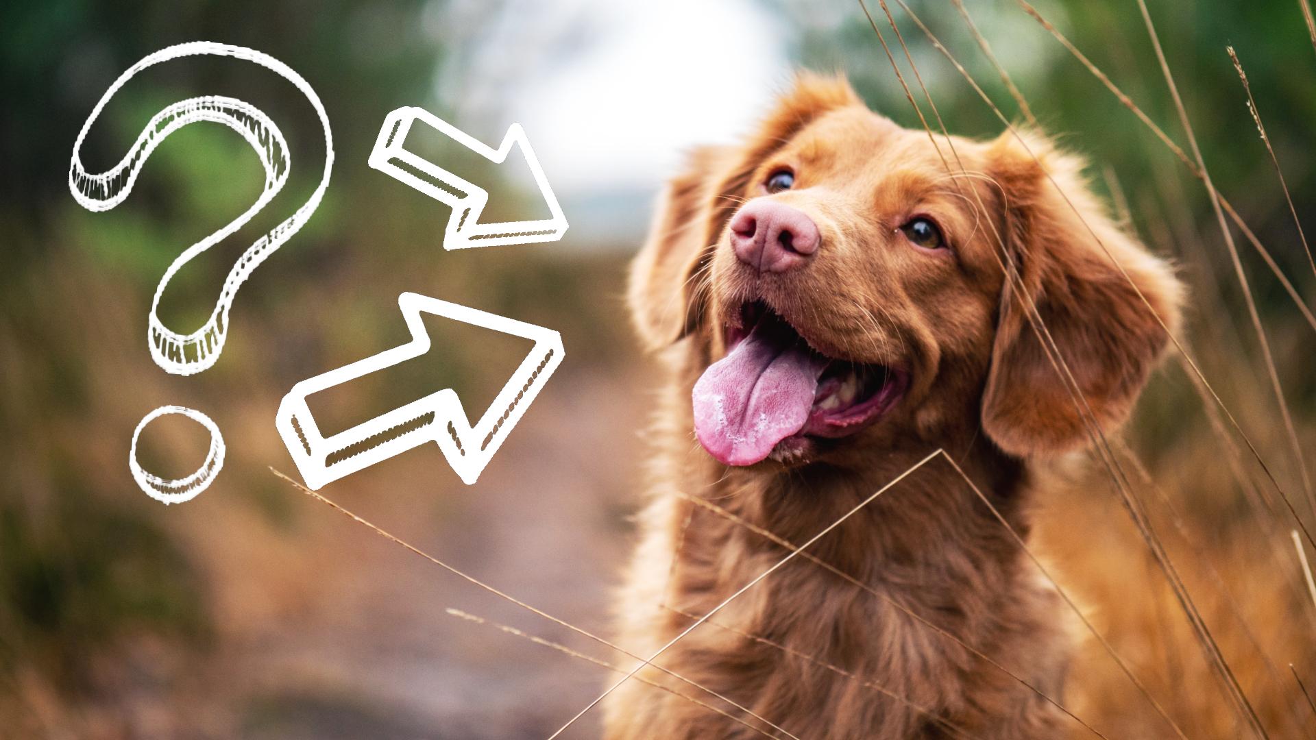 dlaczego warto mieć psa