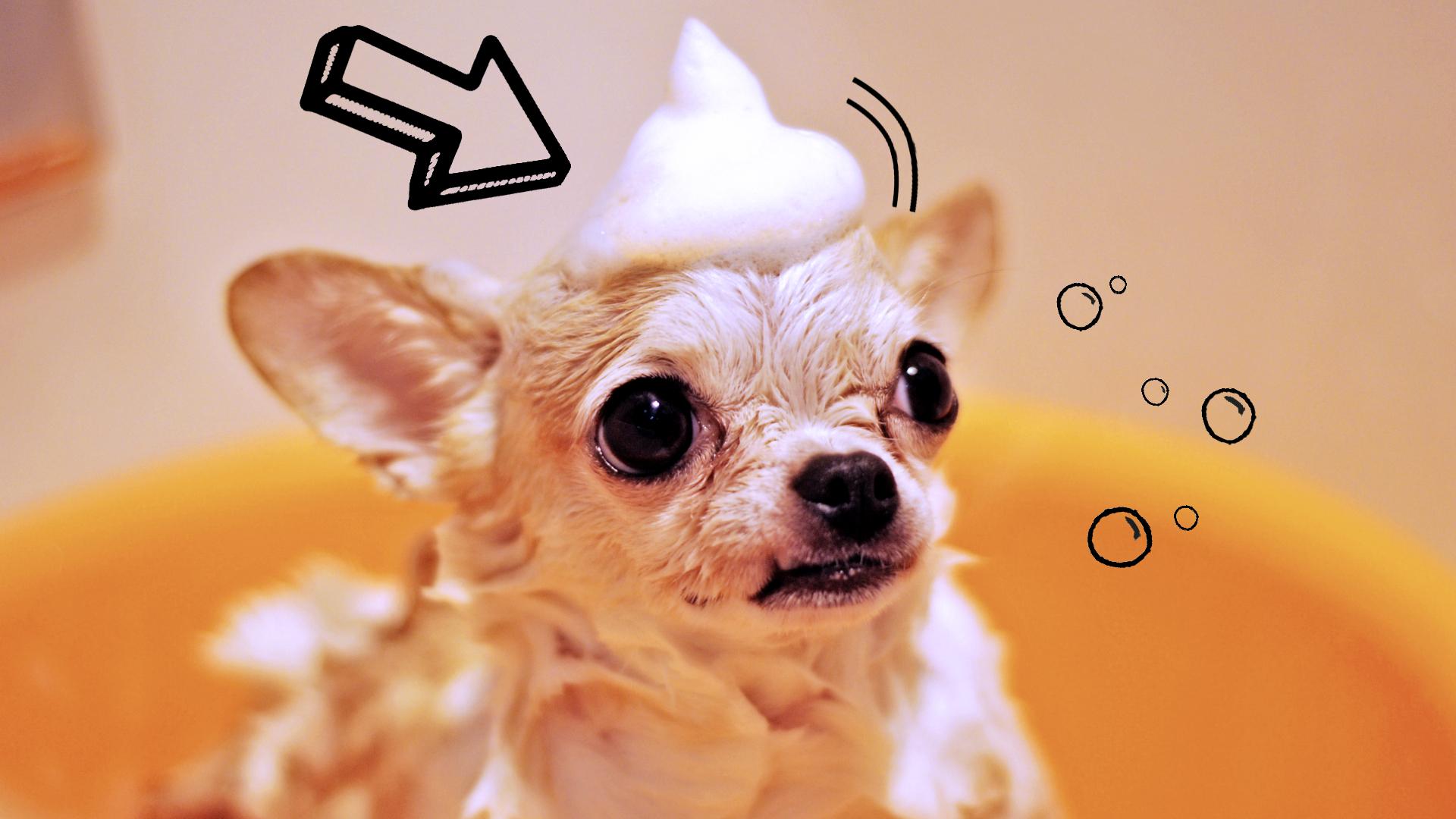najlepszy szampon dla psa lista