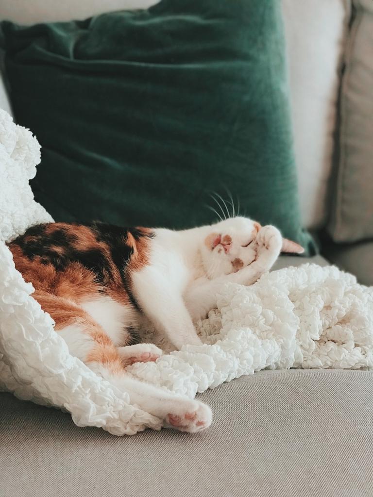 co zrobić z kotem na czas urlopu