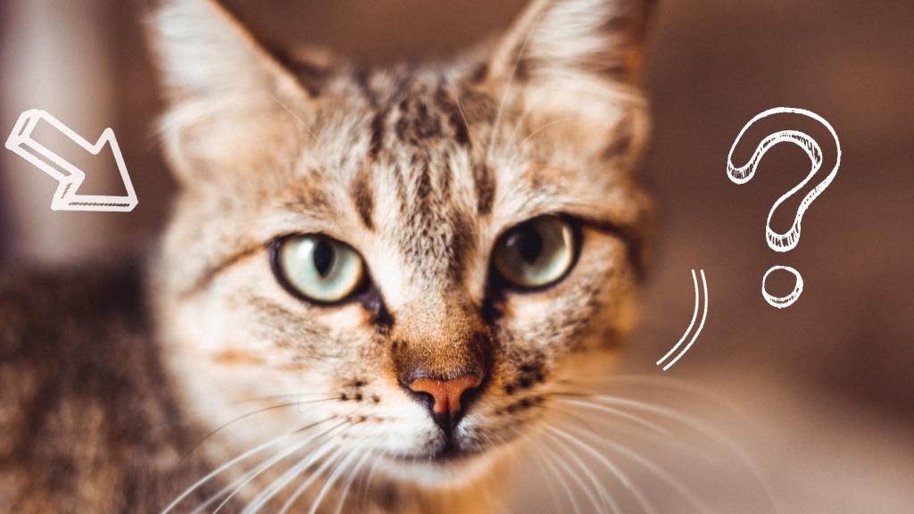 co zrobić z kotem na czas wyjazdu