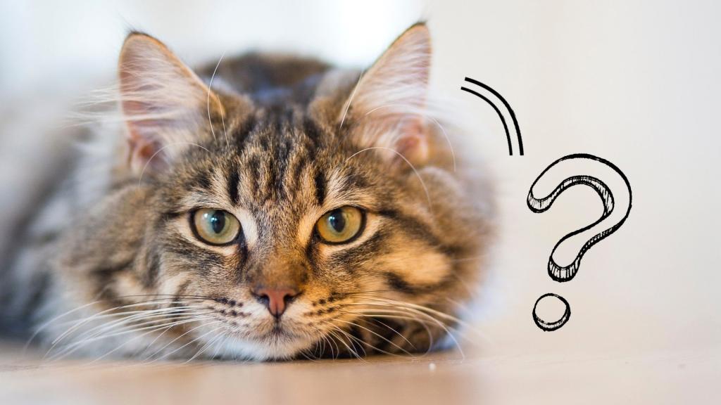 kot przestał jeść karmę - dlaczego kot nie je