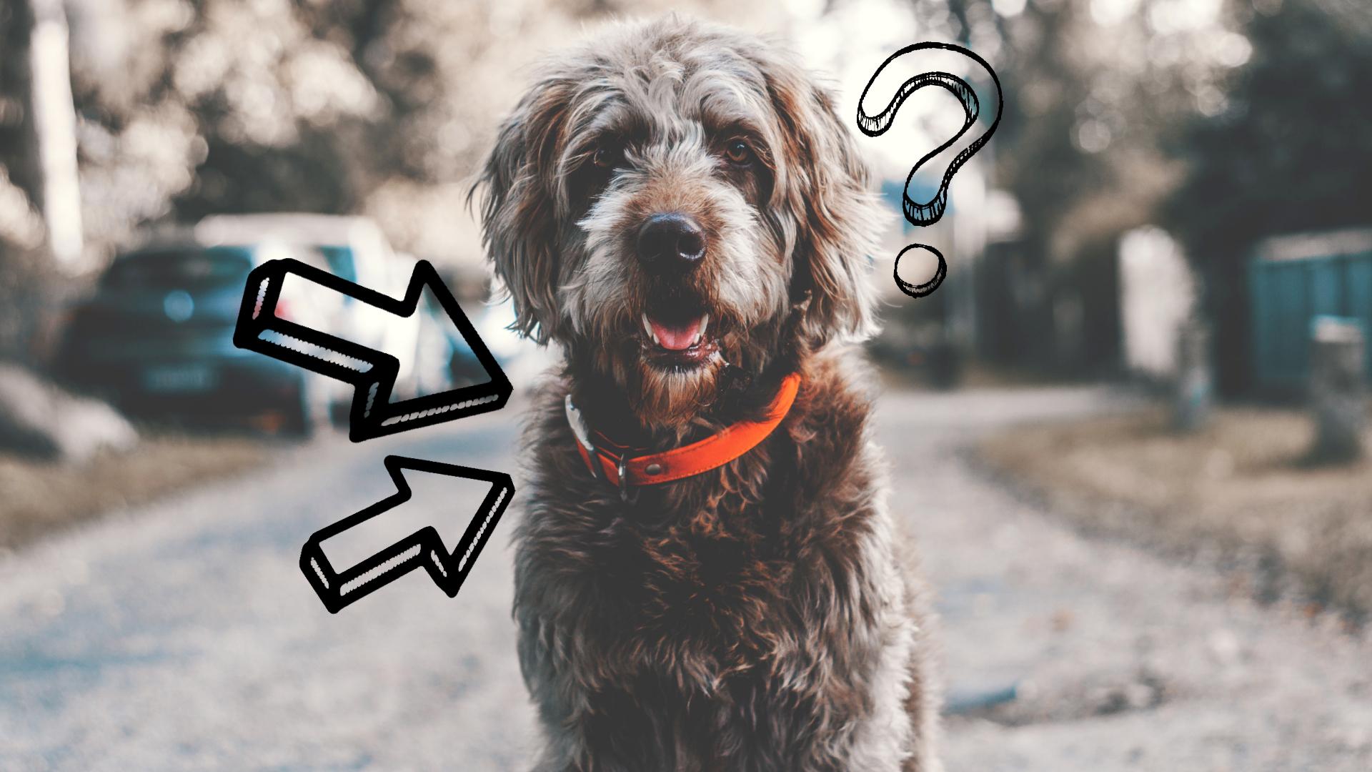 obroża czy szelki co jest lepsze dla psa