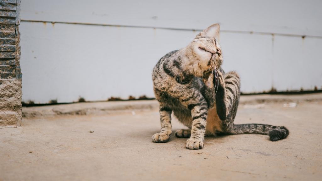 alergia pokarmowa psa kota