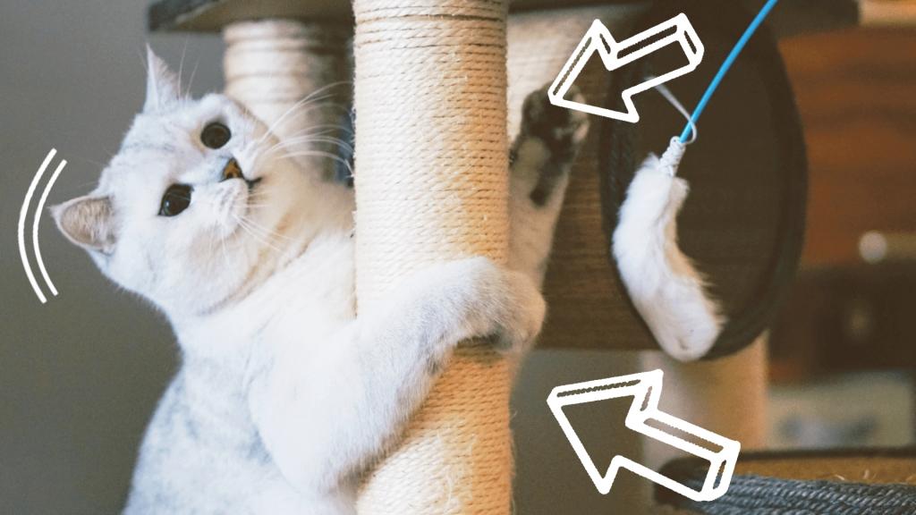 jaki drapak dla kota wybrać