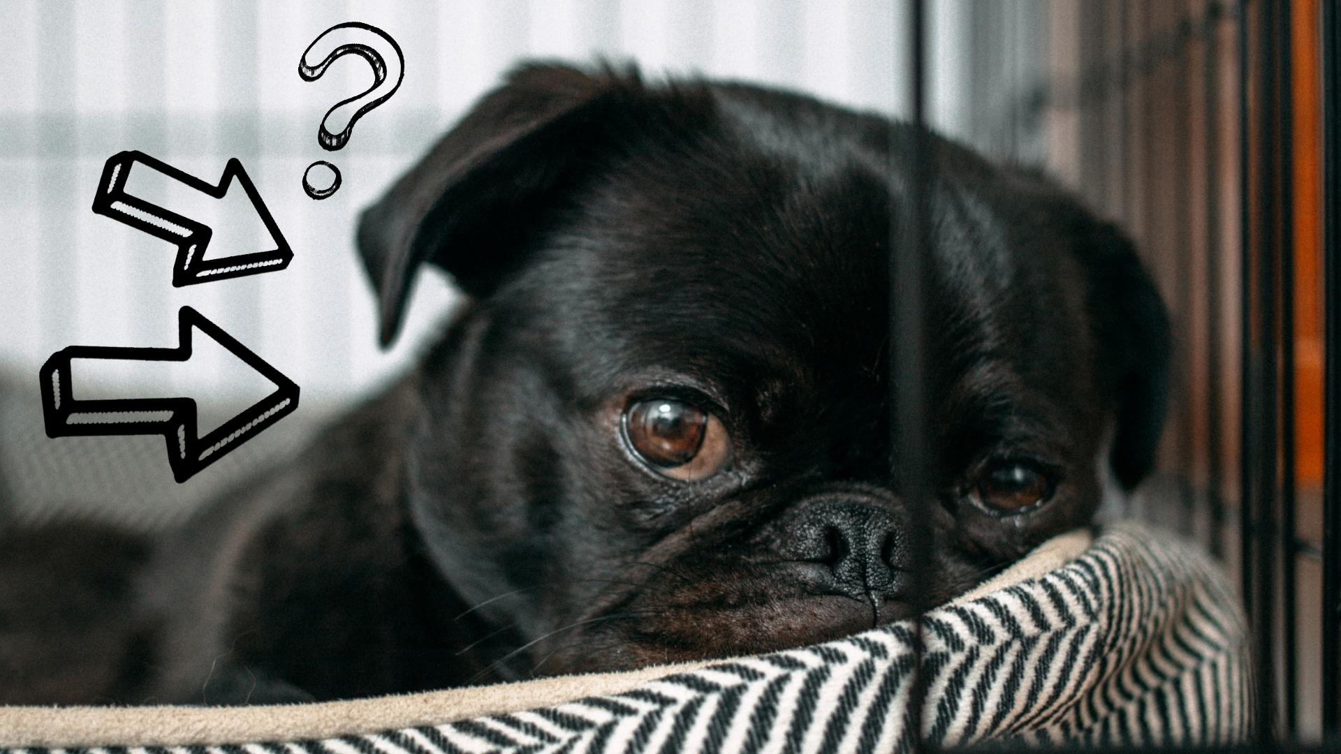 klatka dla psa do domu po co i dlaczego warto