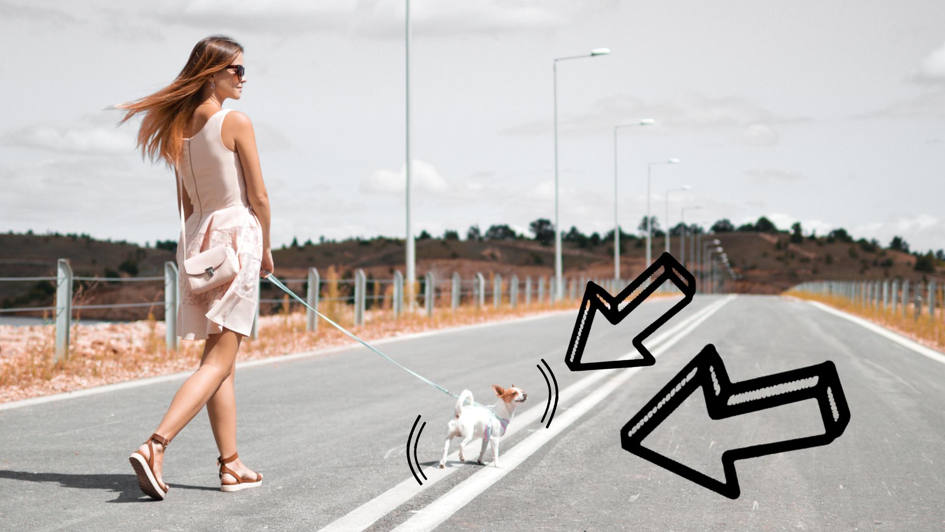 dlaczego warto wychodzić z psem
