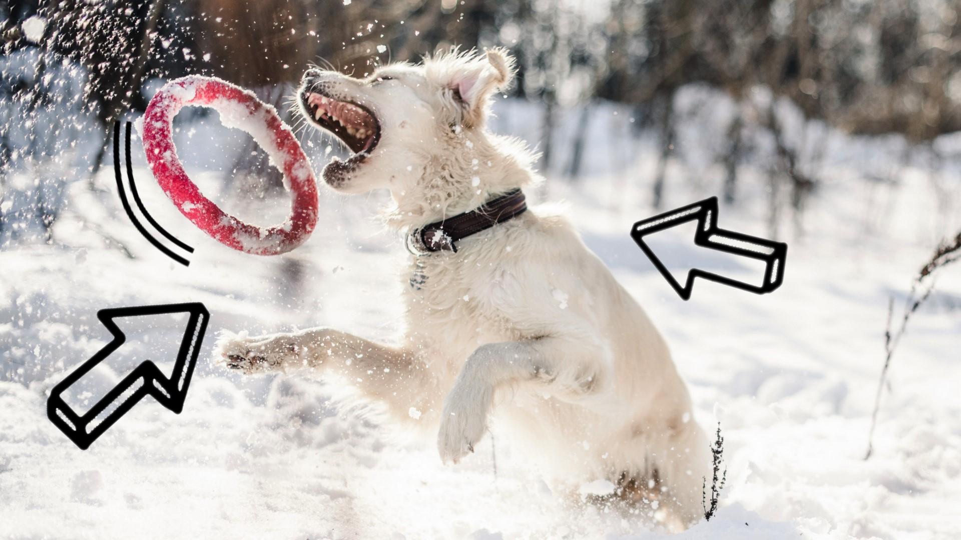 dlaczego warto bawić się z psem