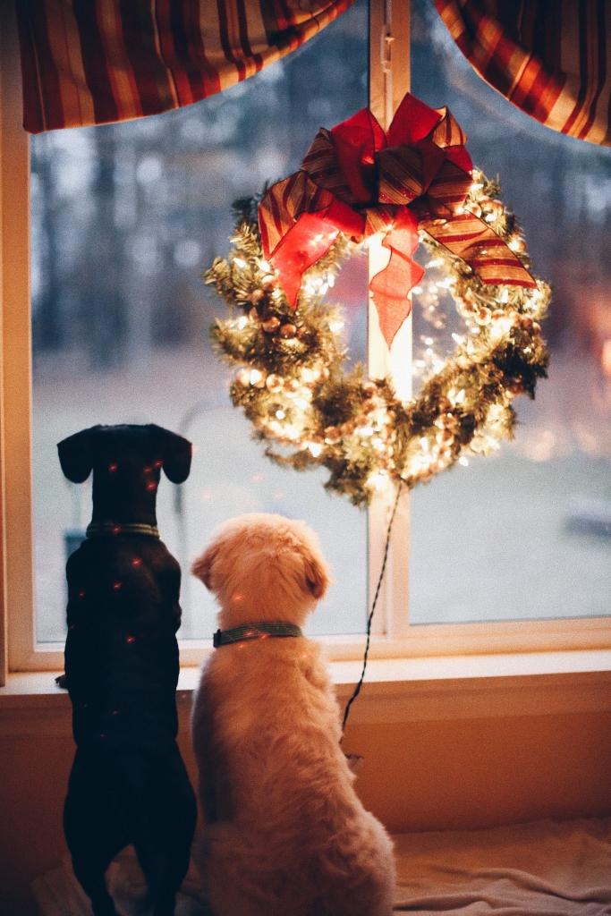 jaki prezent dla psa