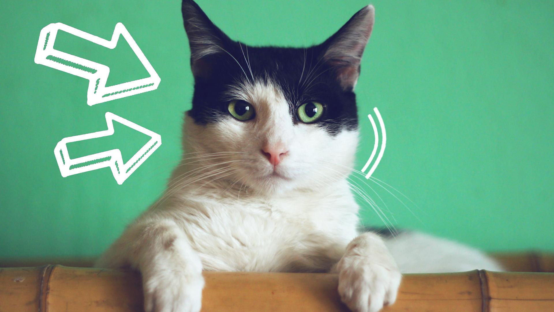 tauryna dla kota