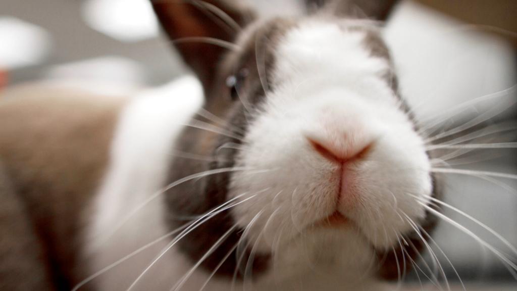 prawidłowa dieta królika