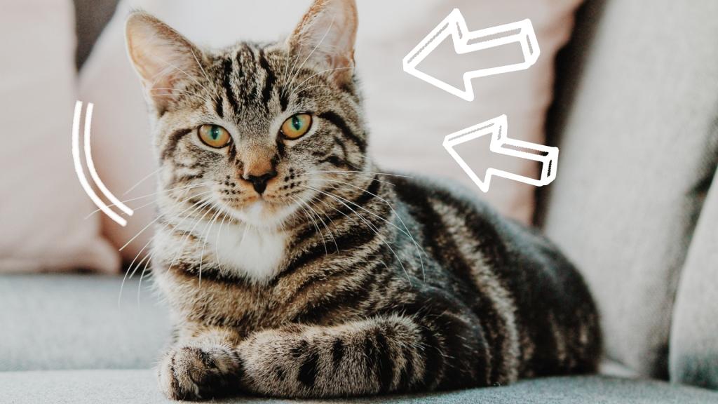 żywienie kota po kastracji