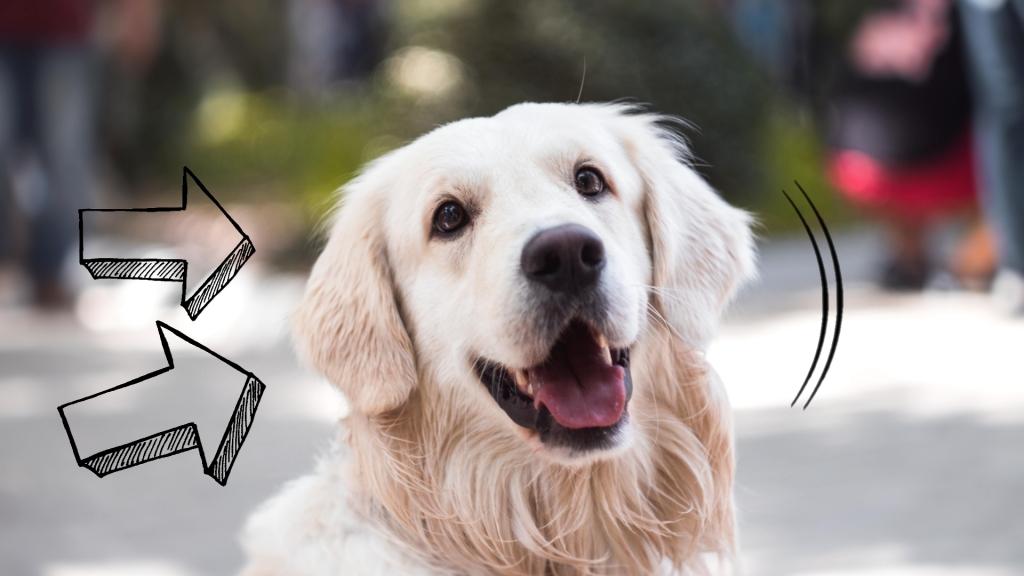 karma sucha dla psa alergika