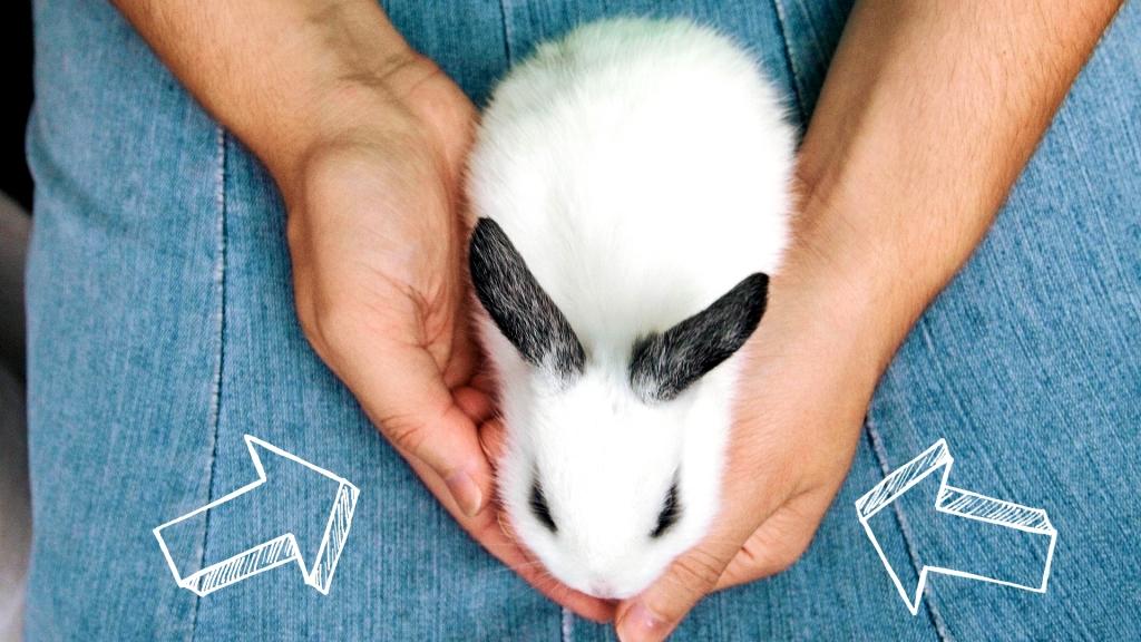 żywienie młodego królika