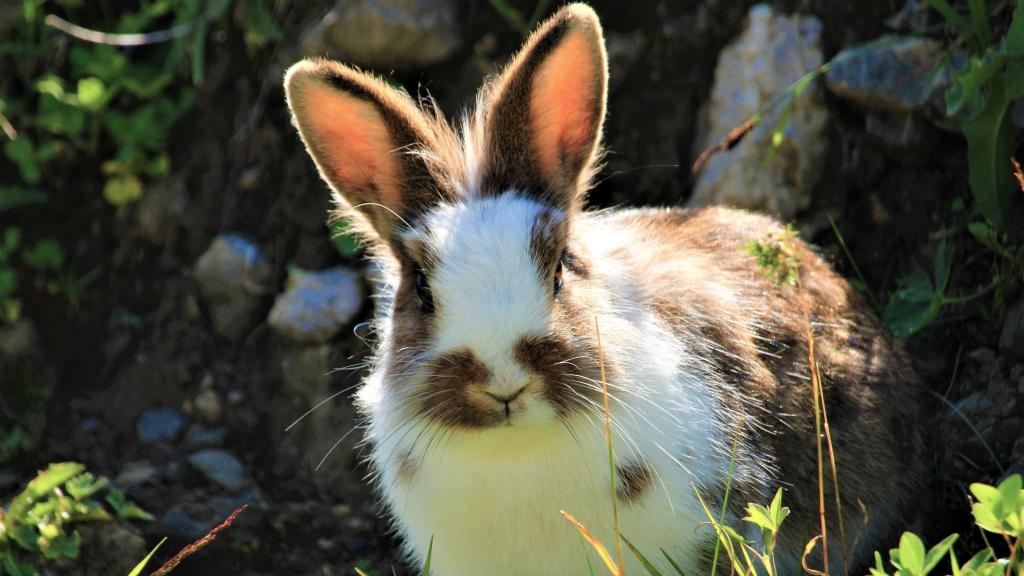 czego nie może jeść królik zakazane produkty