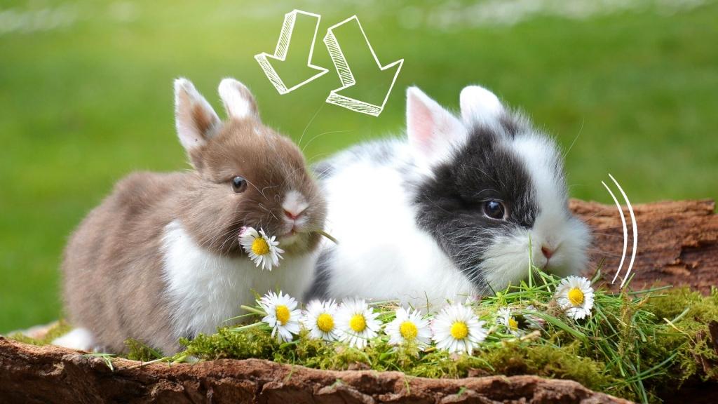 czego nie może jeść królik