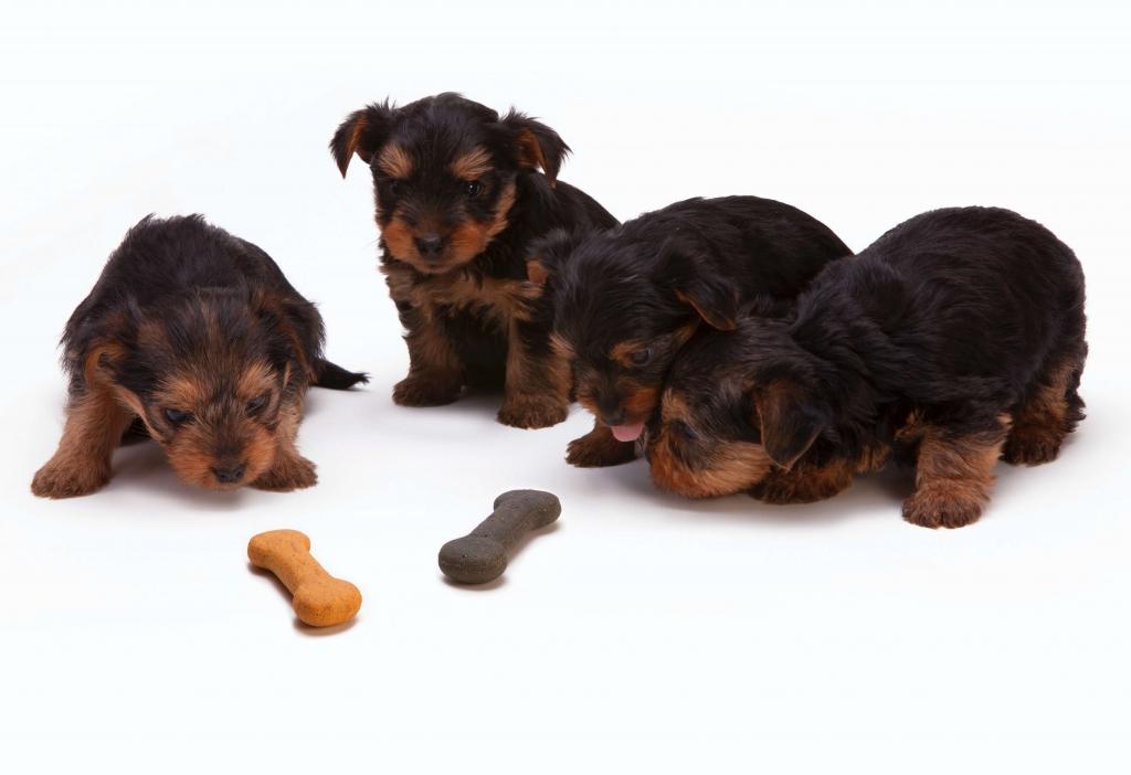 kompletna i zbilansowana karma dla psa w każdym wieku