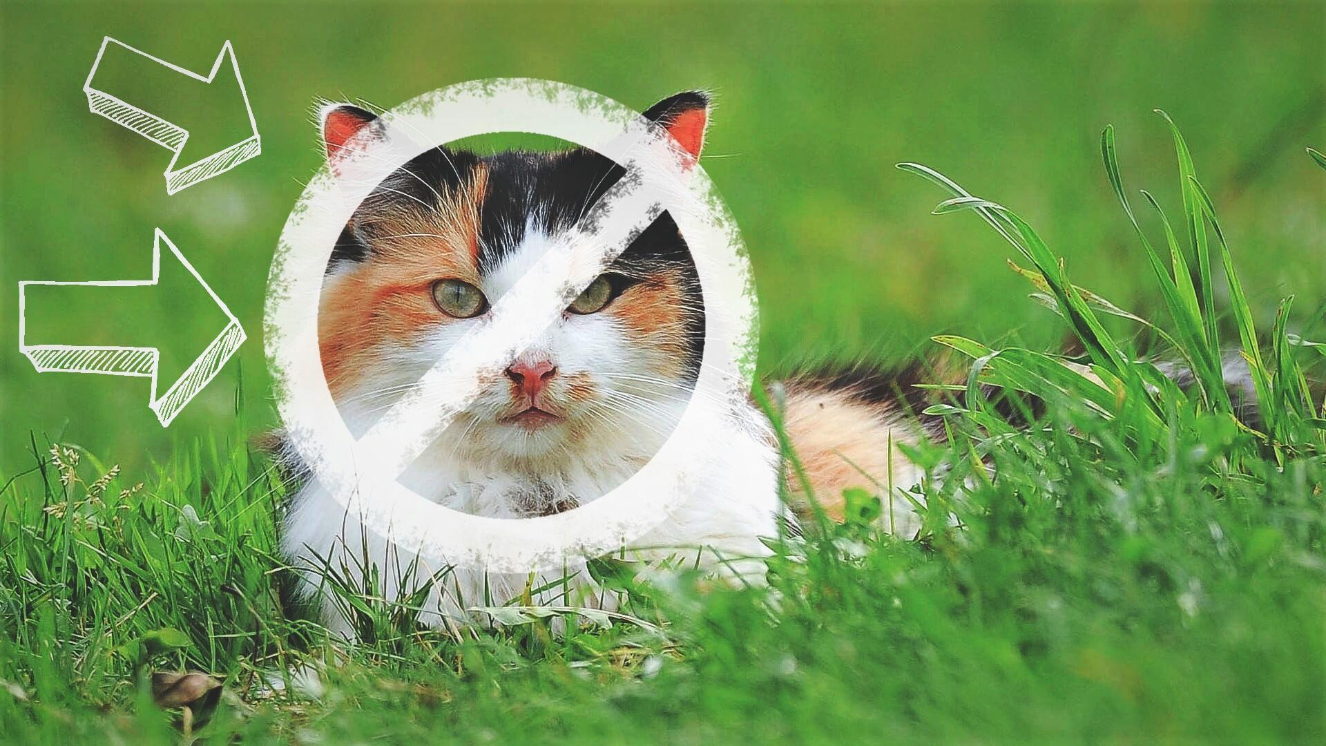 wypuszczanie kota