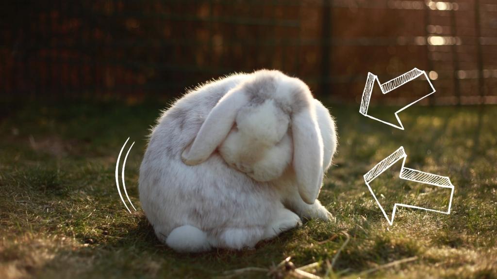 czy królika można kąpać