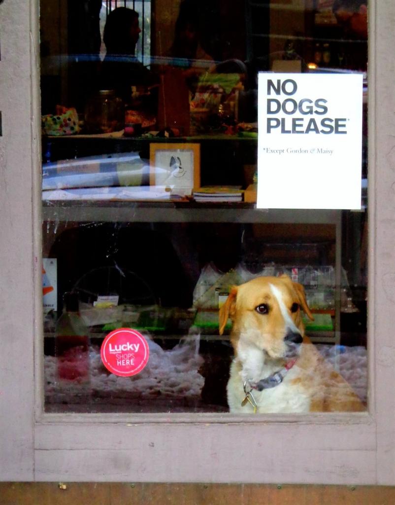 dobry sklep zoologiczny jak wybrać