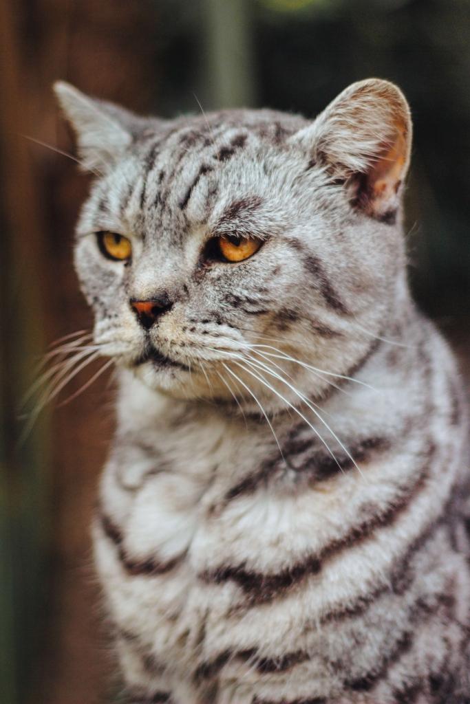 kot nie chce jeść co robić