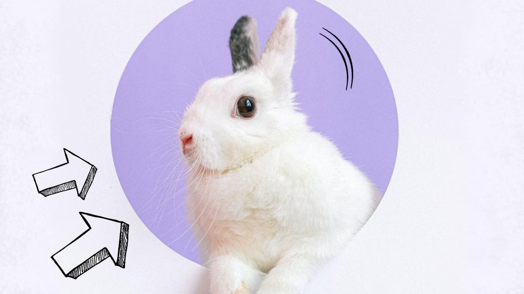 zachowanie królika