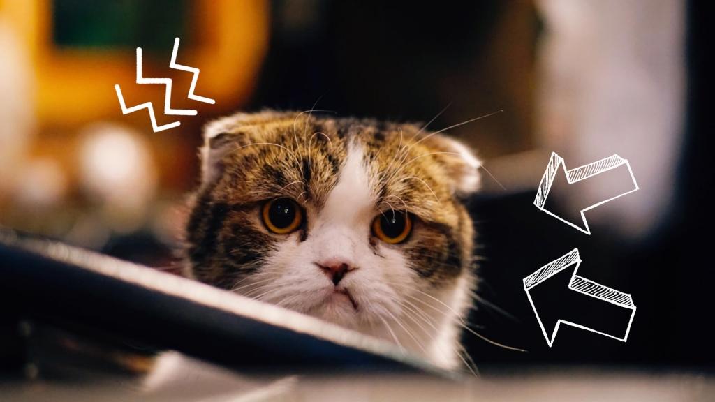 objawy bólu u kota
