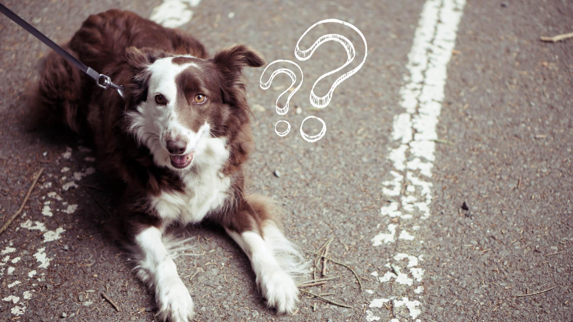prebiotyki dla psa