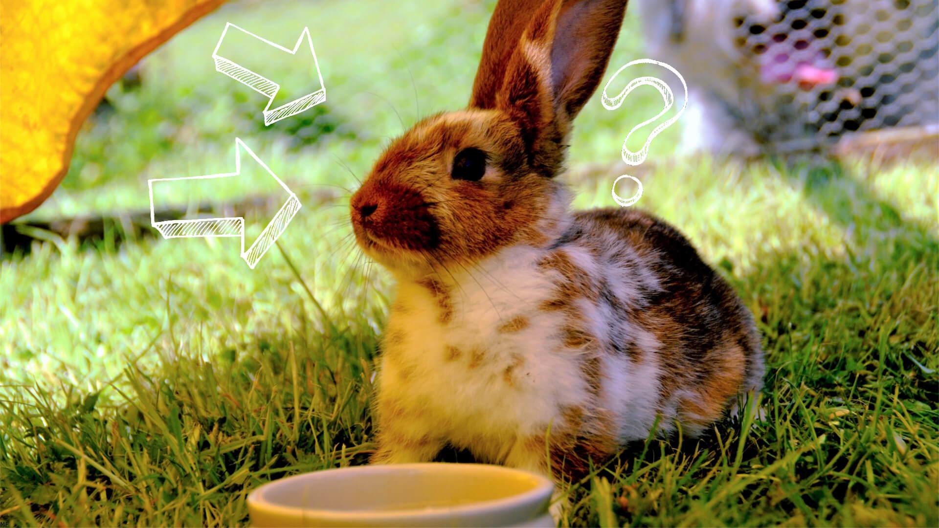 poidełko czy miska dla królika