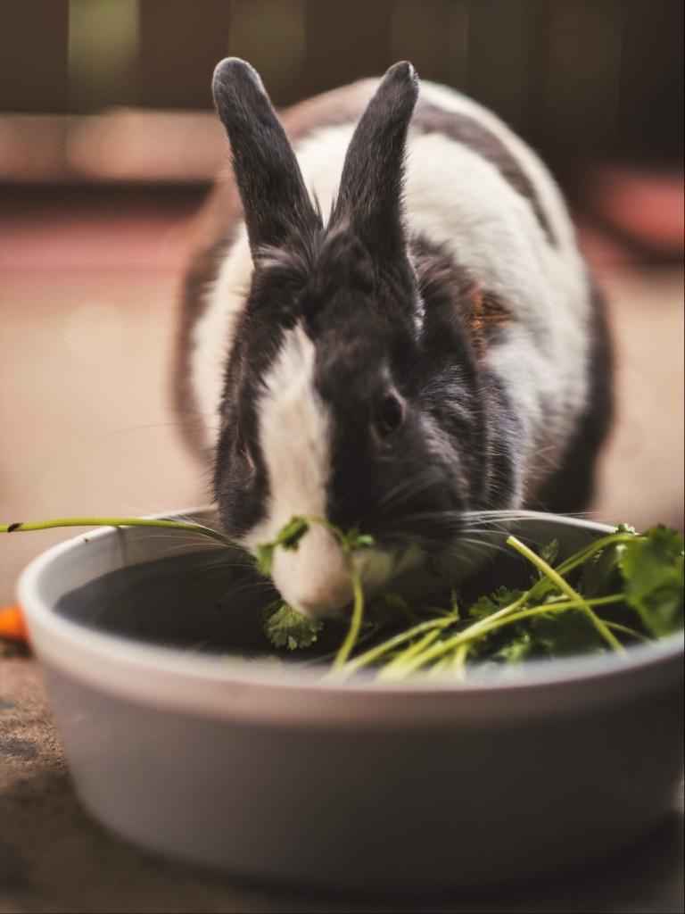 poidełko miska dla królika
