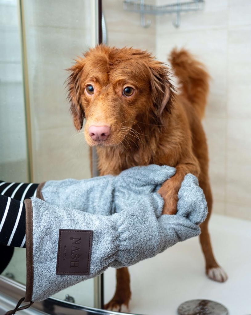 jak często kąpać psa z włosem